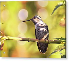 Tiny Bird Upon A Branch Acrylic Print