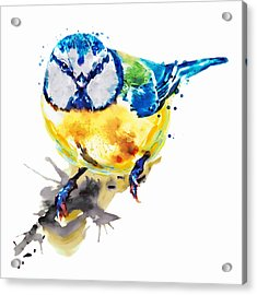 Tiny Colorful Bird Acrylic Print by Marian Voicu