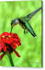 Tiny Feet II Acrylic Print by Sue Melvin