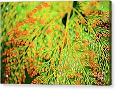 Acrylic Print featuring the photograph Tiny Flowers Blooming  by D Davila