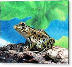 Tiny Frog Acrylic Print