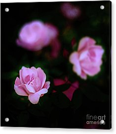 Tiny Pink Azaleas Acrylic Print by Tamyra Ayles