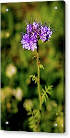 Acrylic Print featuring the photograph Tiny Puprle Flowers by Onyonet  Photo Studios
