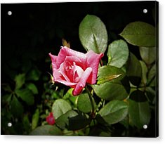 Tiny Rose Acrylic Print