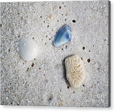 Tiny Sea Shells And A Piece Of Coral In Fine Wet Sand Macro Acrylic Print by Shawn O'Brien