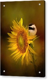 Tiny Surprise Bird Art Acrylic Print by Jai Johnson