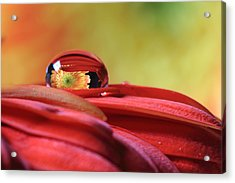 Tiny Water Drop Reflections Acrylic Print