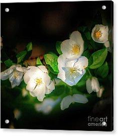 Tiny White Azales Acrylic Print by Tamyra Ayles