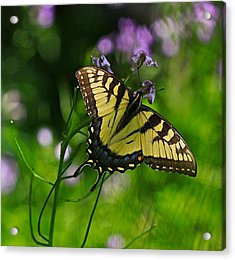 Tiny Wings Acrylic Print by Robert Pearson