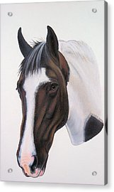 Tippy Acrylic Print by Lucy Deane