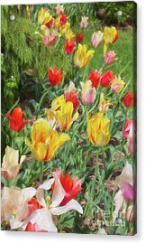 Tiptoe Through The Tulips  Acrylic Print by A New Focus Photography