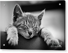 Tired .... So Tired Acrylic Print by Alessandro Giorgi Art Photography