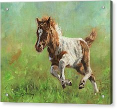 Titch. Minature Horse Foal Acrylic Print