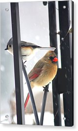 Titmouse And Cardinal Acrylic Print
