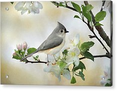 Titmouse In Blossoms 1 Acrylic Print by Lori Deiter