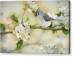 Titmouse In Blossoms 2 Acrylic Print by Lori Deiter