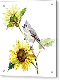 Titmouse With Sunflower Acrylic Print