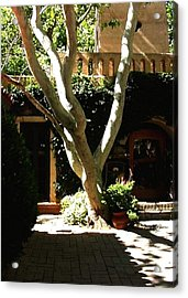 Acrylic Print featuring the photograph Tlaquepaque Sycamore by Fred Wilson
