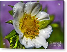 To Be A Strawberry Acrylic Print