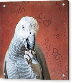 To Be Owned By A Grey Is To Know Love Acrylic Print