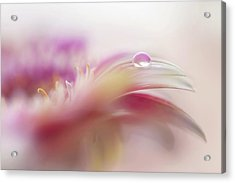 Acrylic Print featuring the photograph To Live In Dream 2. Macro Gerbera by Jenny Rainbow