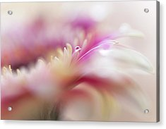 Acrylic Print featuring the photograph To Live In Dream 3. Macro Gerbera by Jenny Rainbow