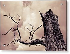 To Reach Acrylic Print by Joseph Westrupp