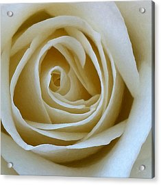 To The Heart Of The Rose Acrylic Print