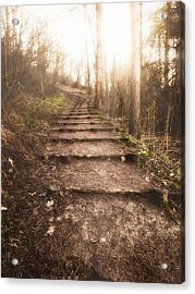 To The Light Acrylic Print by Wim Lanclus