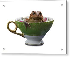 Toad In A Teacup Acrylic Print by Ron Jones