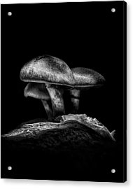 Toadstools On A Toronto Trail No 3 Acrylic Print