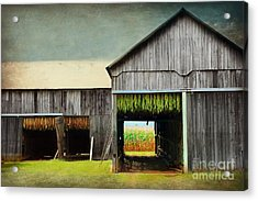 Tobacco Drying Acrylic Print