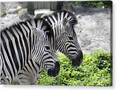 Together Acrylic Print by Keith Lovejoy