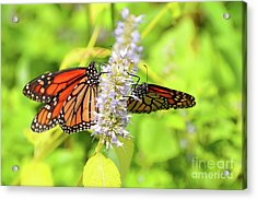 Together We Can Fly So High Acrylic Print