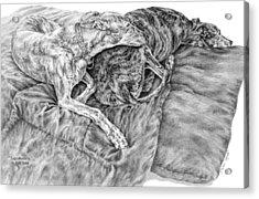 Togetherness - Greyhound Dog Art Print Acrylic Print