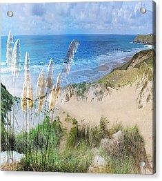 Toi Tois In Coastal  Sandhills Acrylic Print