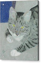 Tom Bombadil Acrylic Print by Miriam A Kilmer