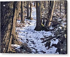 Tom Paul Trail Winter Acrylic Print