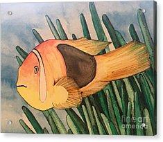 Tomato Clown Fish Acrylic Print