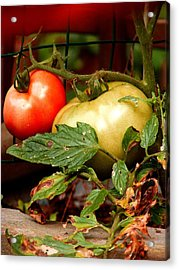 Tomatoes In Red N Green Acrylic Print by Margie Avellino