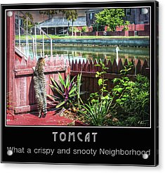 Acrylic Print featuring the photograph Tomcat Breakfast by Hanny Heim