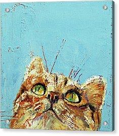 Tomcat Acrylic Print by Michael Creese