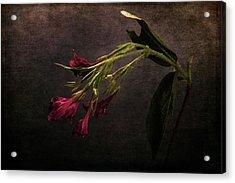 Acrylic Print featuring the photograph Toning Down by Randi Grace Nilsberg