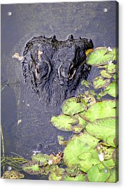 Too Close For Comfort Acrylic Print by Ed Smith