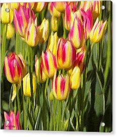 Too Many Tulips Acrylic Print by Jeffrey Kolker