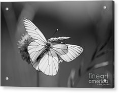 Too Many Wings Acrylic Print