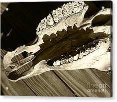 Tooth Decay Acrylic Print by Laura Brightwood