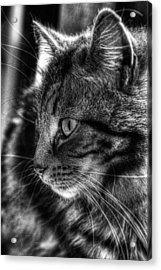 Toots2 Acrylic Print by Fraser Davidson