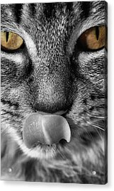 Toots3 Acrylic Print by Fraser Davidson