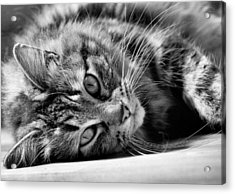 Toots4 Acrylic Print by Fraser Davidson